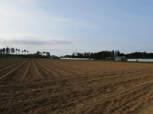 藤田農園の農場
