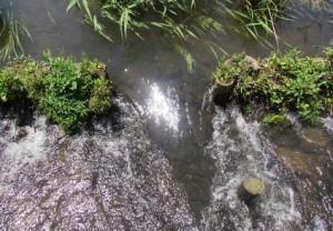 茨城県茨城町涸沼自然公園の小川