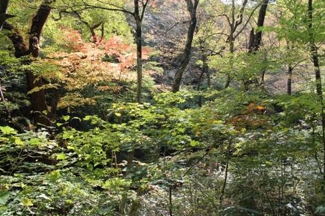 花貫渓谷の秋は川沿いに生い茂る木々の枝が左右からせり出し華やかな紅葉が見れます