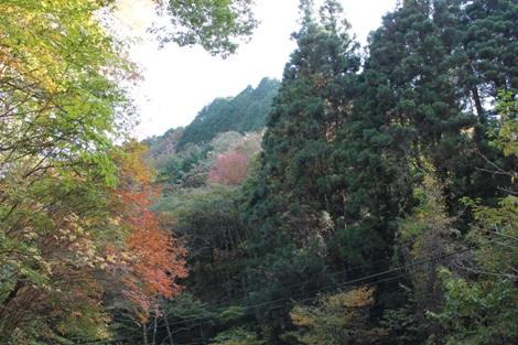 花園渓谷は自然の宝庫です