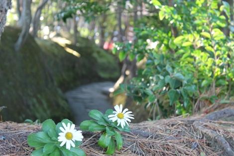 天心遺跡内の花