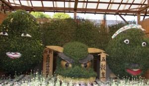 笠間の菊まつりでは顔の形をした面白い菊も見られます