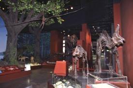 中生代(約2億5200万年~6500万年前)の化石の恐竜です