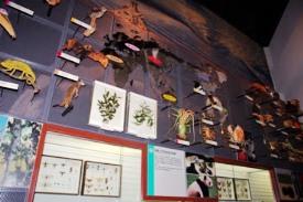 森林に棲む生態系の展示です