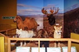 氷河期の動物たちはどうやって移動してきたのか