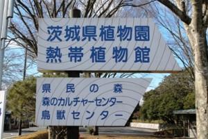 茨城県那珂市にある茨城県植物園では自然を身近にして人々の憩いの場として多種様々な植物を観察することができます。