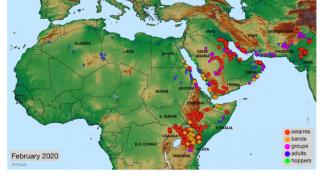 アフリカからのバッタ巨大群襲来は新型コロナに続く大きな危難