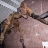 坂東市のミュージアムパーク茨城県自然博物館