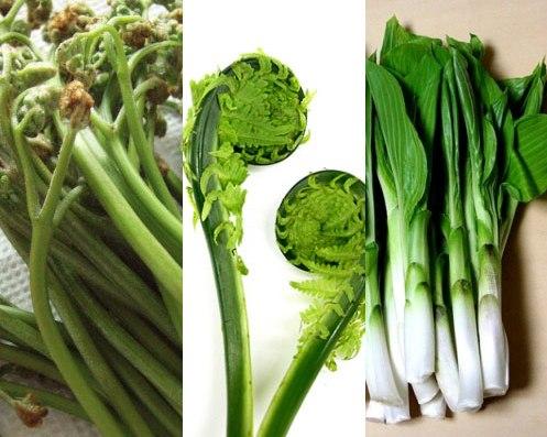 山菜(ワラビ・コゴミ・ウルイ)